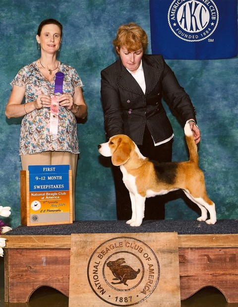 Ch. Shillington Soft Spot - Softie winning puppy sweepstakes at the National Specialty