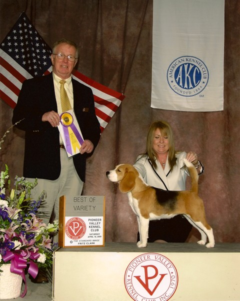 Ch. Shillington Soft Spot - Softie, winning Best of Variety in Springfield, Mass.