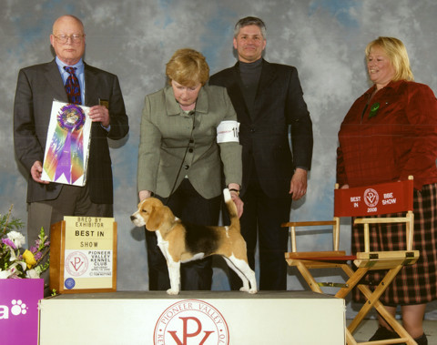 Minnie - Ch. Shillington Serendipity, winning Best Bred By Exhibitor in Show in Springfield