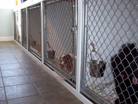 Our lower bank of kennels