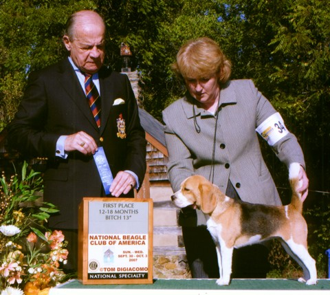 Minnie, winning her class at the 2007 Beagle National